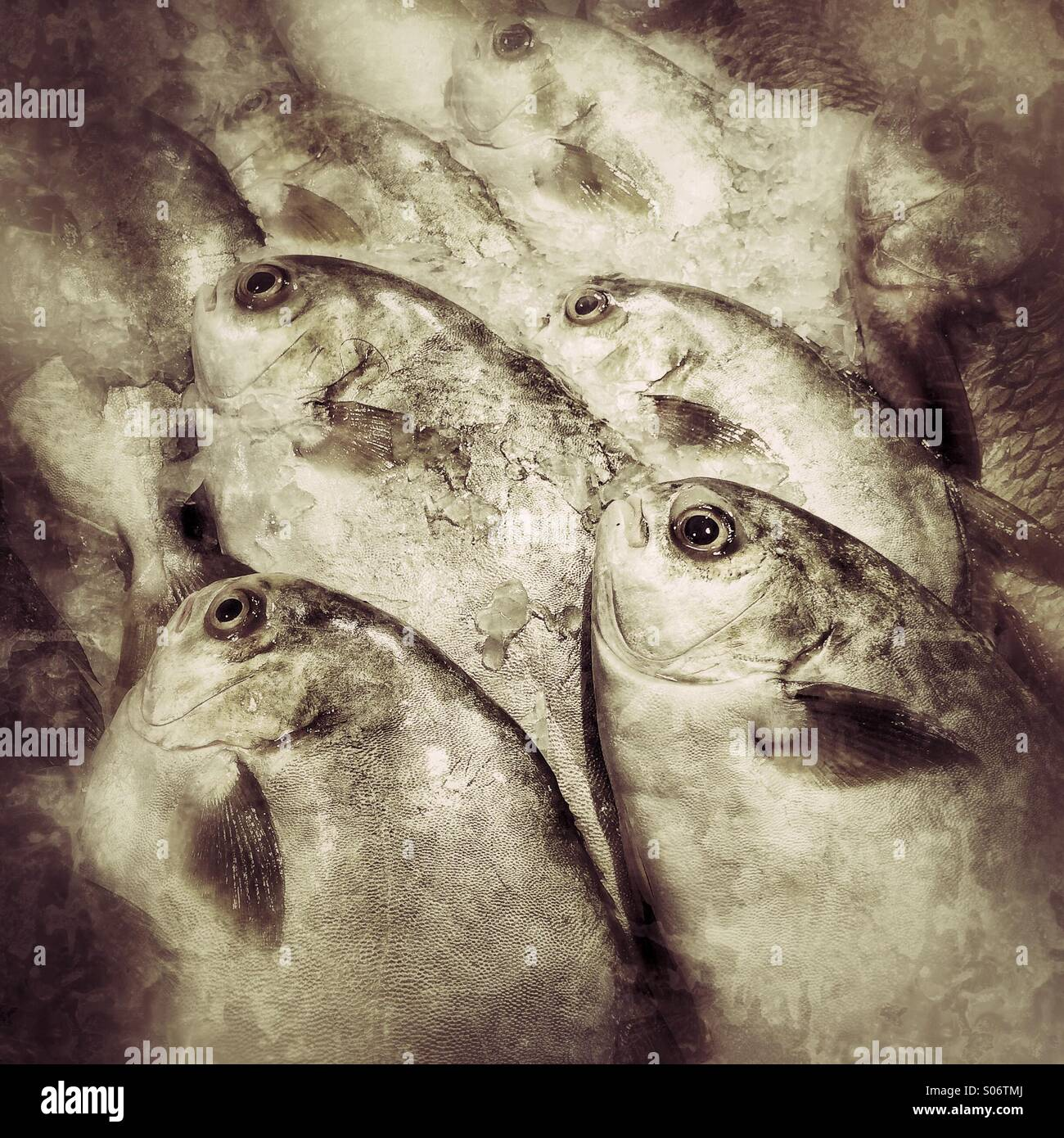 Pesce fresco in vendita al mercato umido Immagini Stock