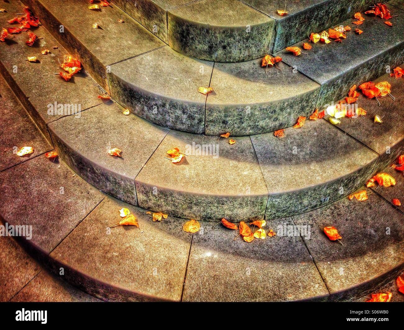 Foglie di autunno e gradini Immagini Stock