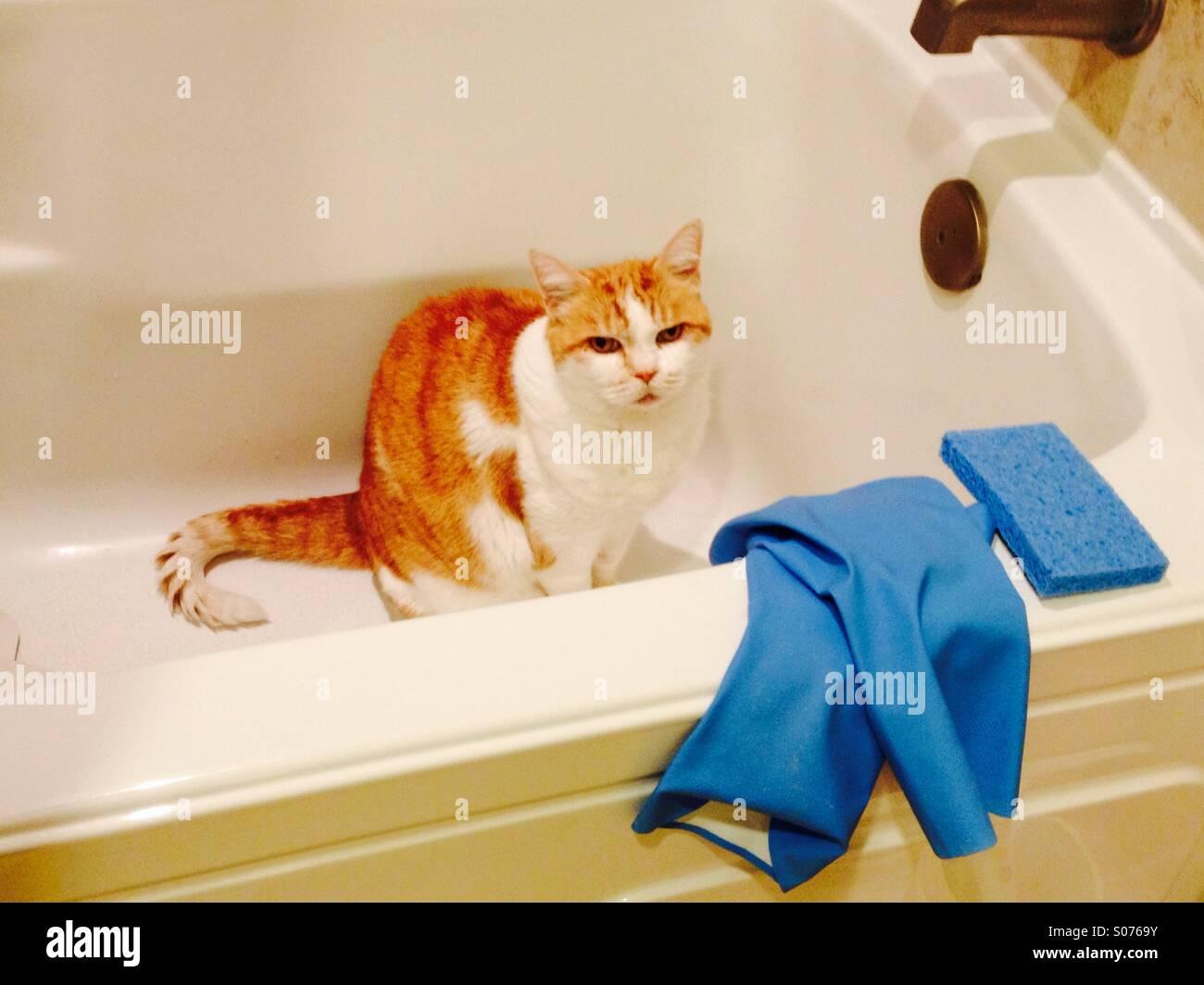 Zenzero Nella Vasca Da Bagno : Arancione e bianco gatto seduti nella vasca da bagno foto