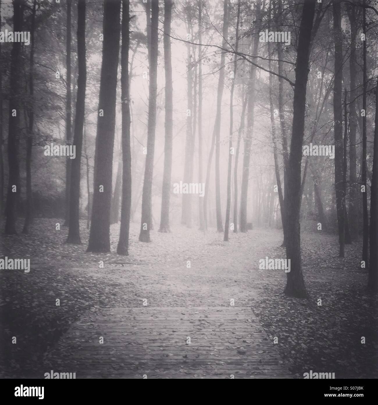 Foto in bianco e nero di una nebbia sentiero forestale Immagini Stock