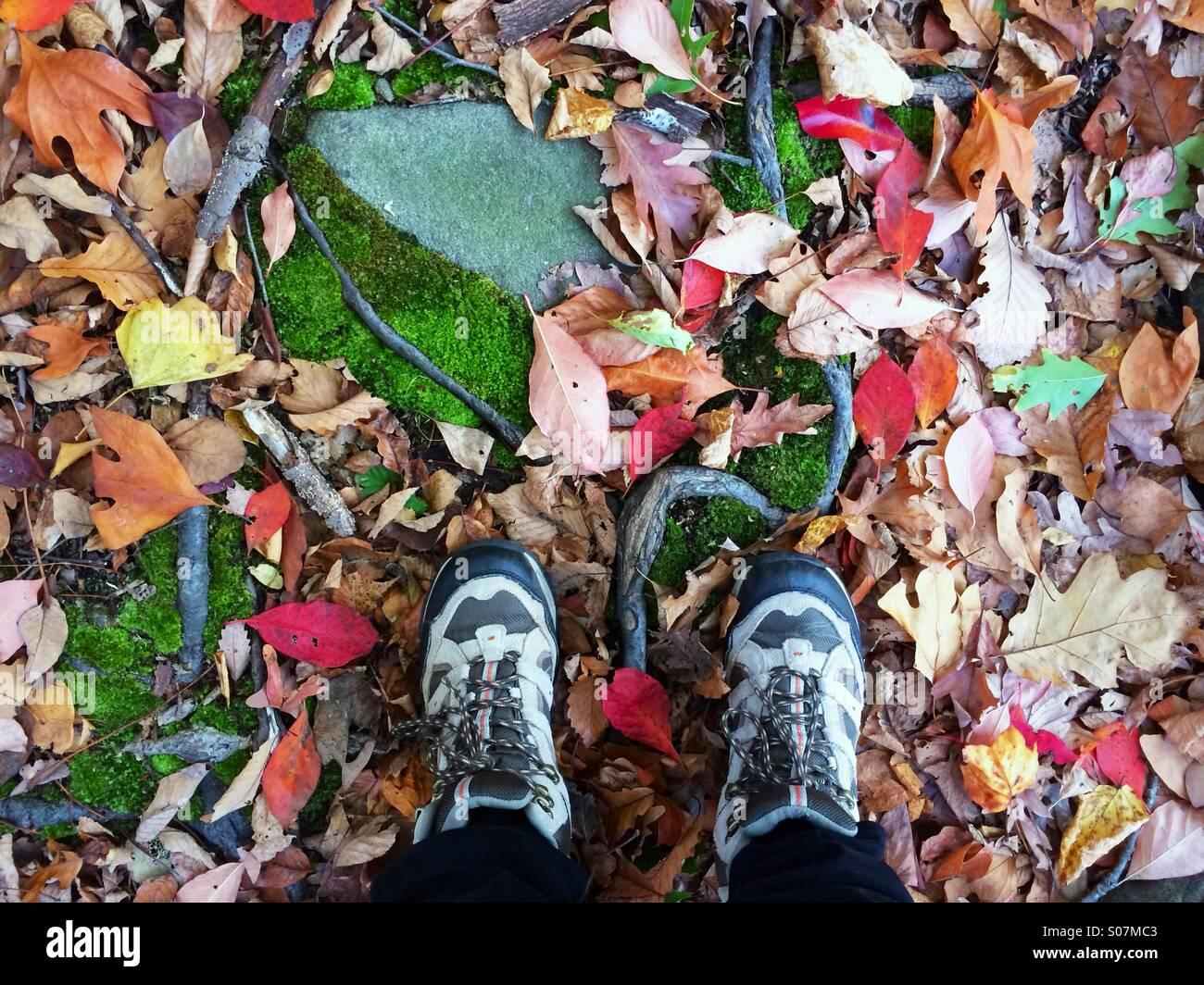 Guardando verso il basso in autunno durante le escursioni con la caduta delle foglie, muschio e radici al calpestio Immagini Stock