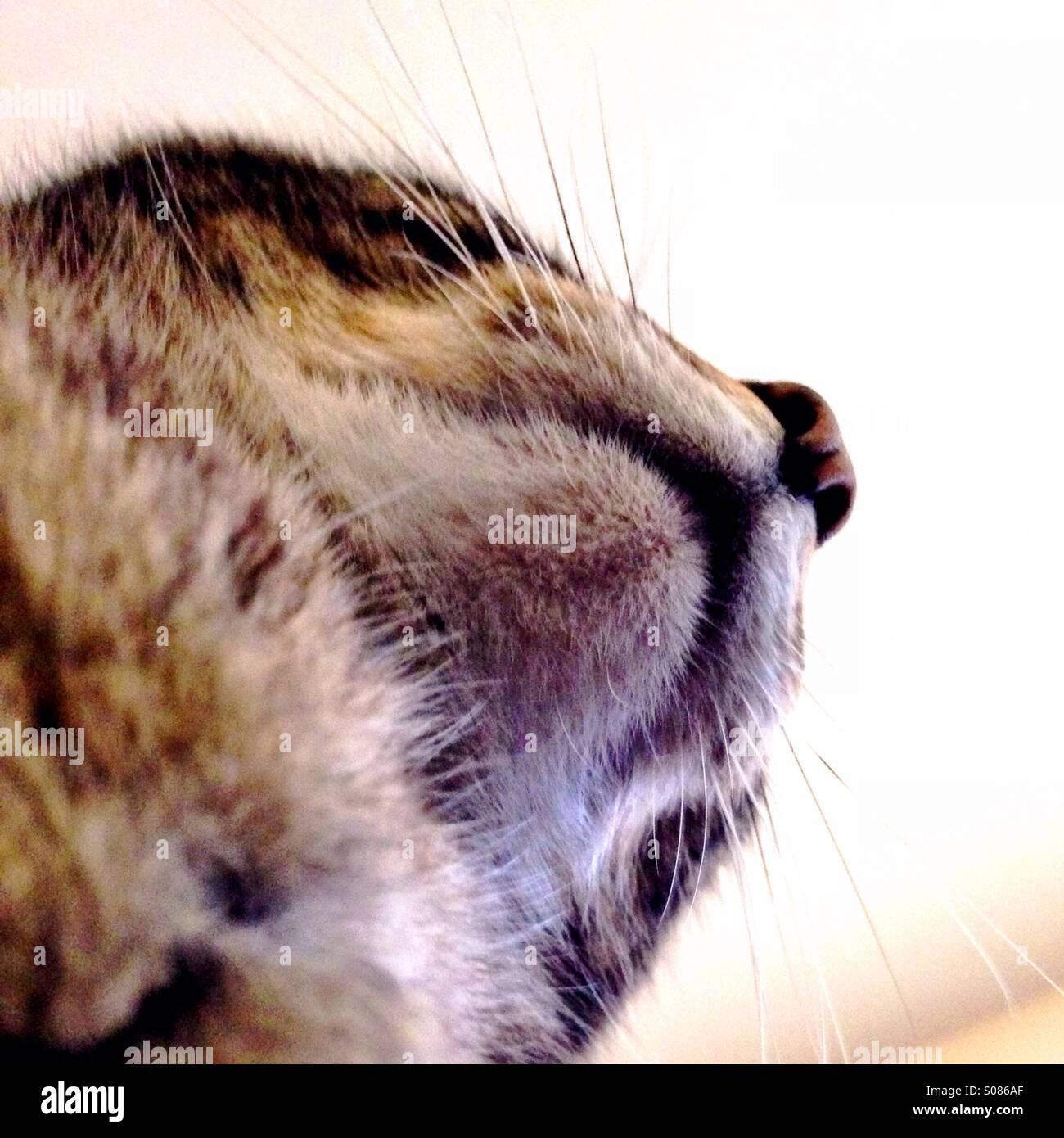 Mento del gatto foto immagine stock 309967239 alamy - Immagine del gatto a colori ...