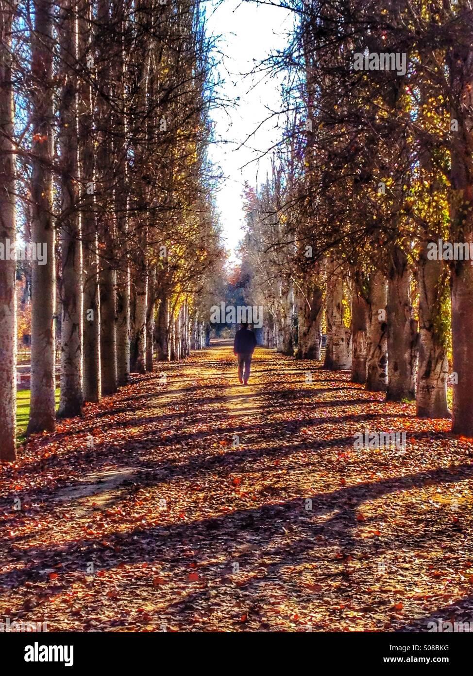 Figura maschile camminando per un viale di alberi Immagini Stock