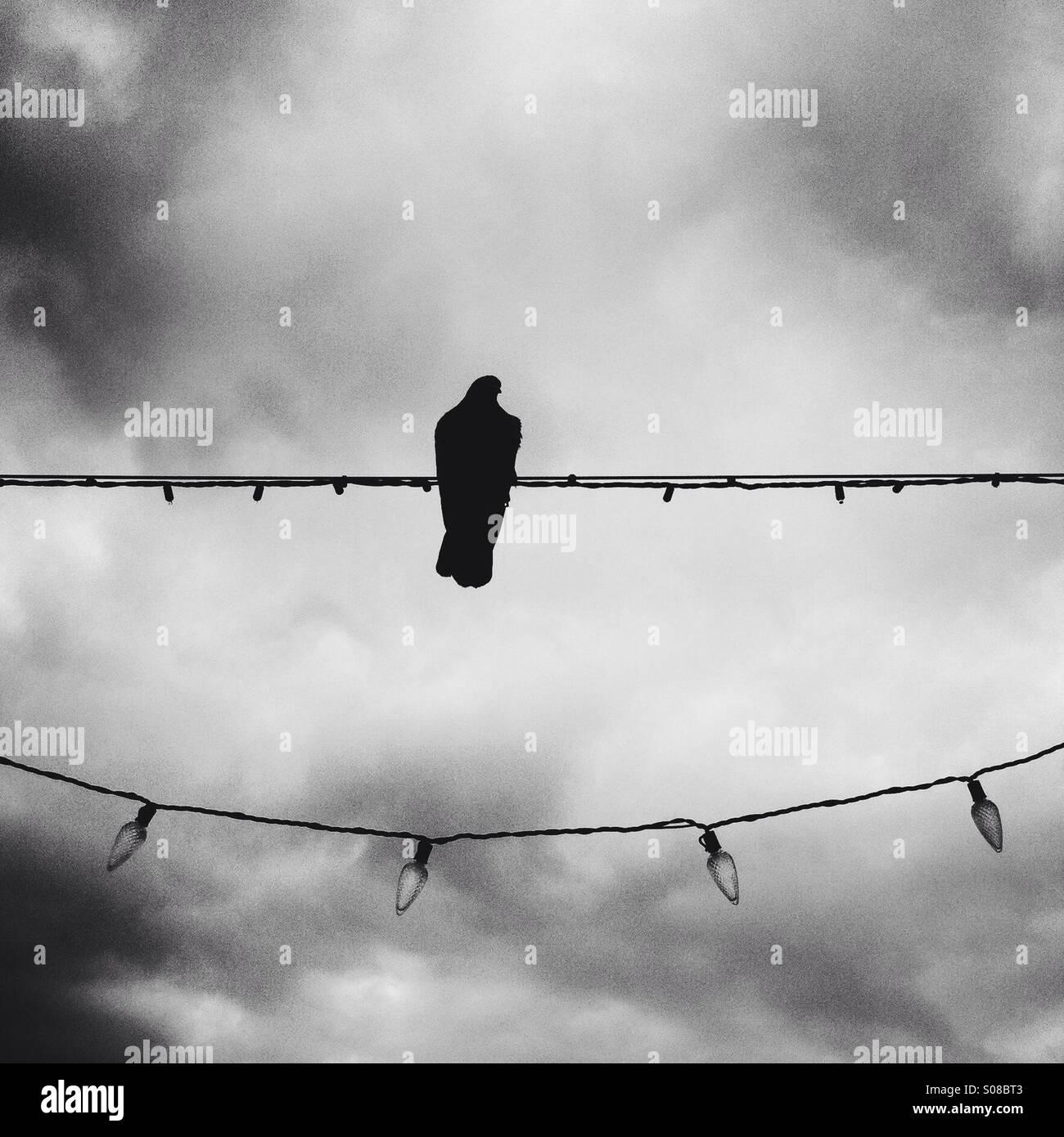 Foto in bianco e nero di un piccione seduta sul filo di luci di Natale. Manhattan Beach. California USA. Immagini Stock