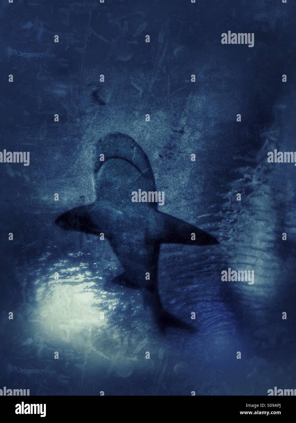 squalo Immagini Stock