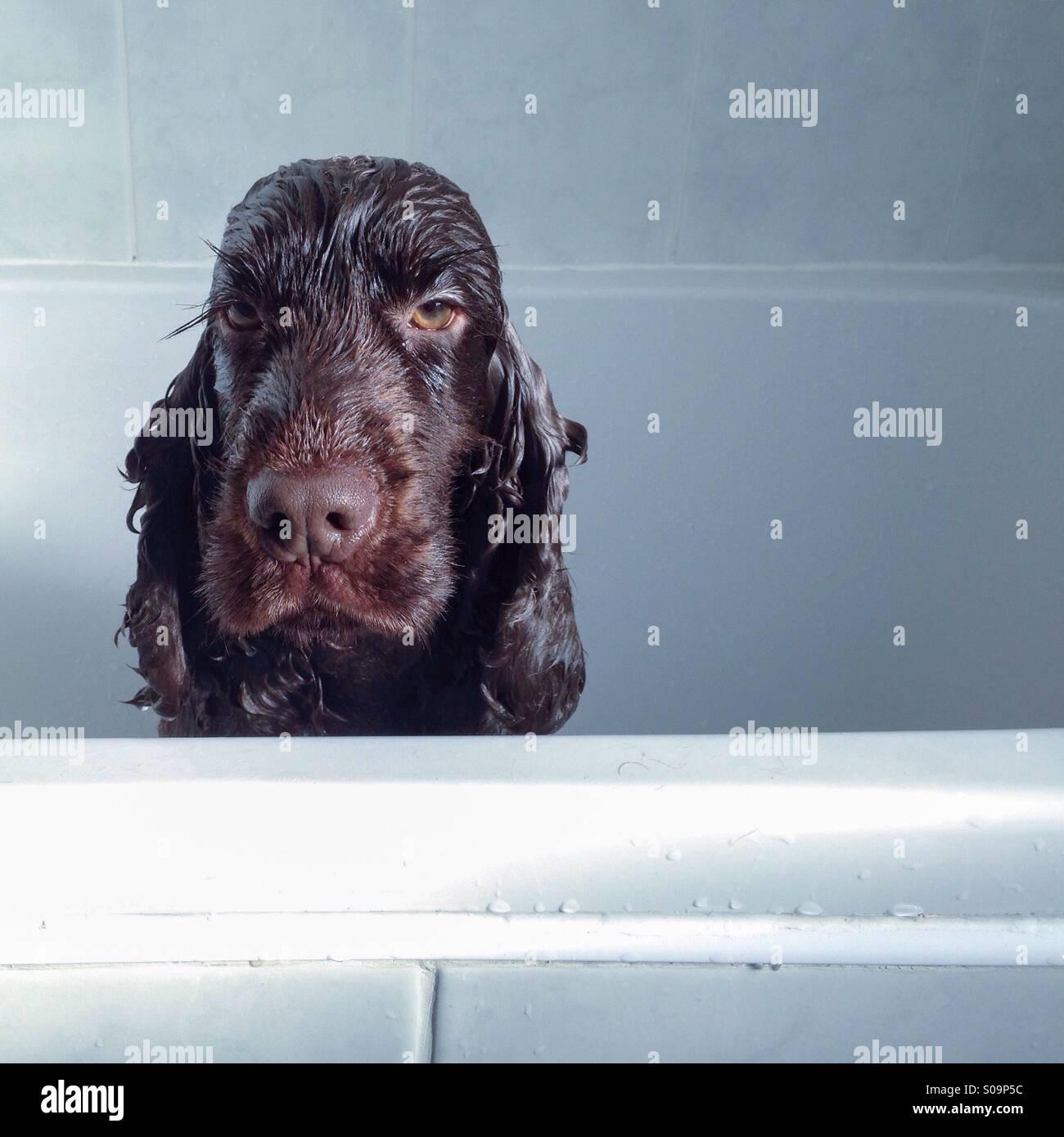 Io odio domenica vasca da bagno Immagini Stock