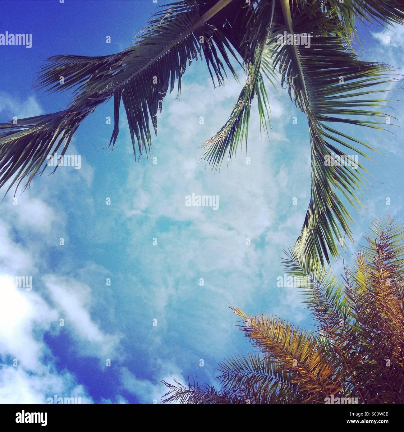 Gli alberi di cocco e cieli blu con luce cloud. Immagini Stock