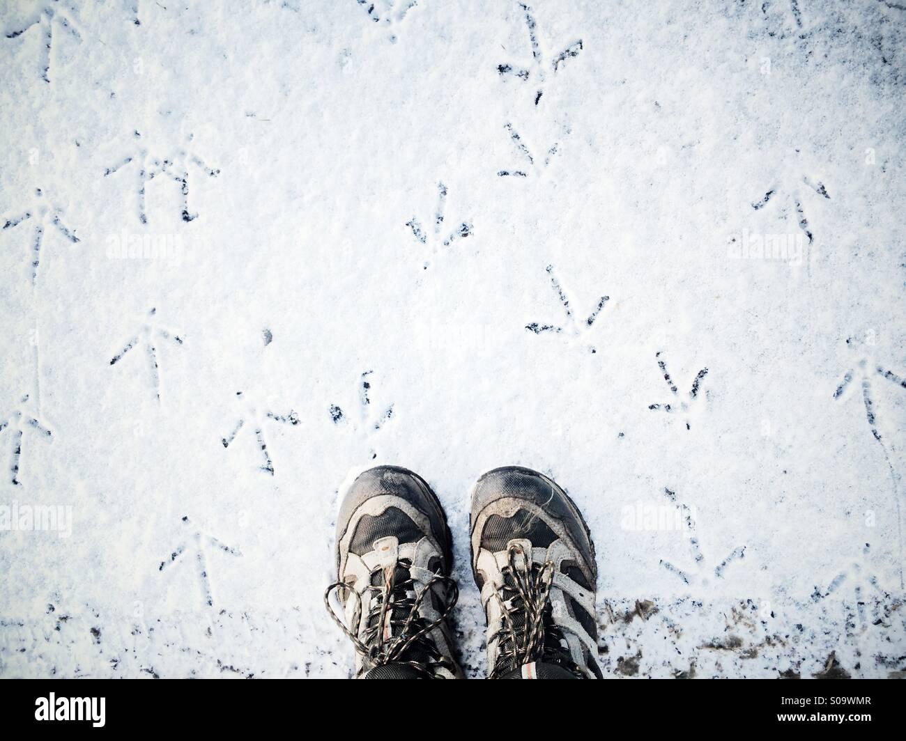 Guardando verso il basso in corrispondenza di scarpe da trekking sulla neve con il fagiano le tracce in tutte le Immagini Stock