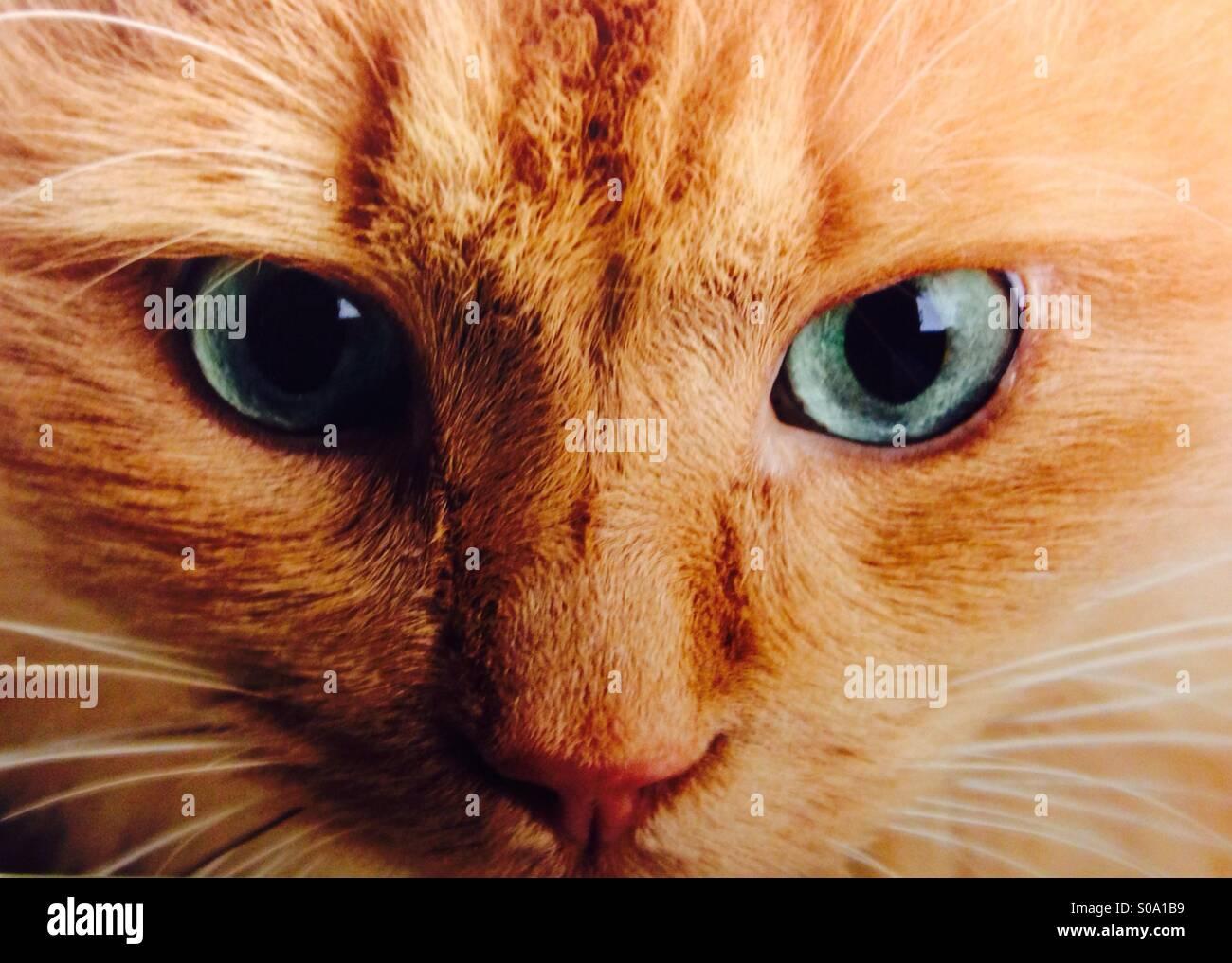 Milton, il più cool cat Immagini Stock