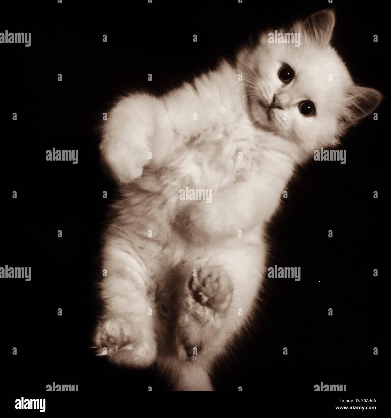 Kitten voglia di coccole Immagini Stock