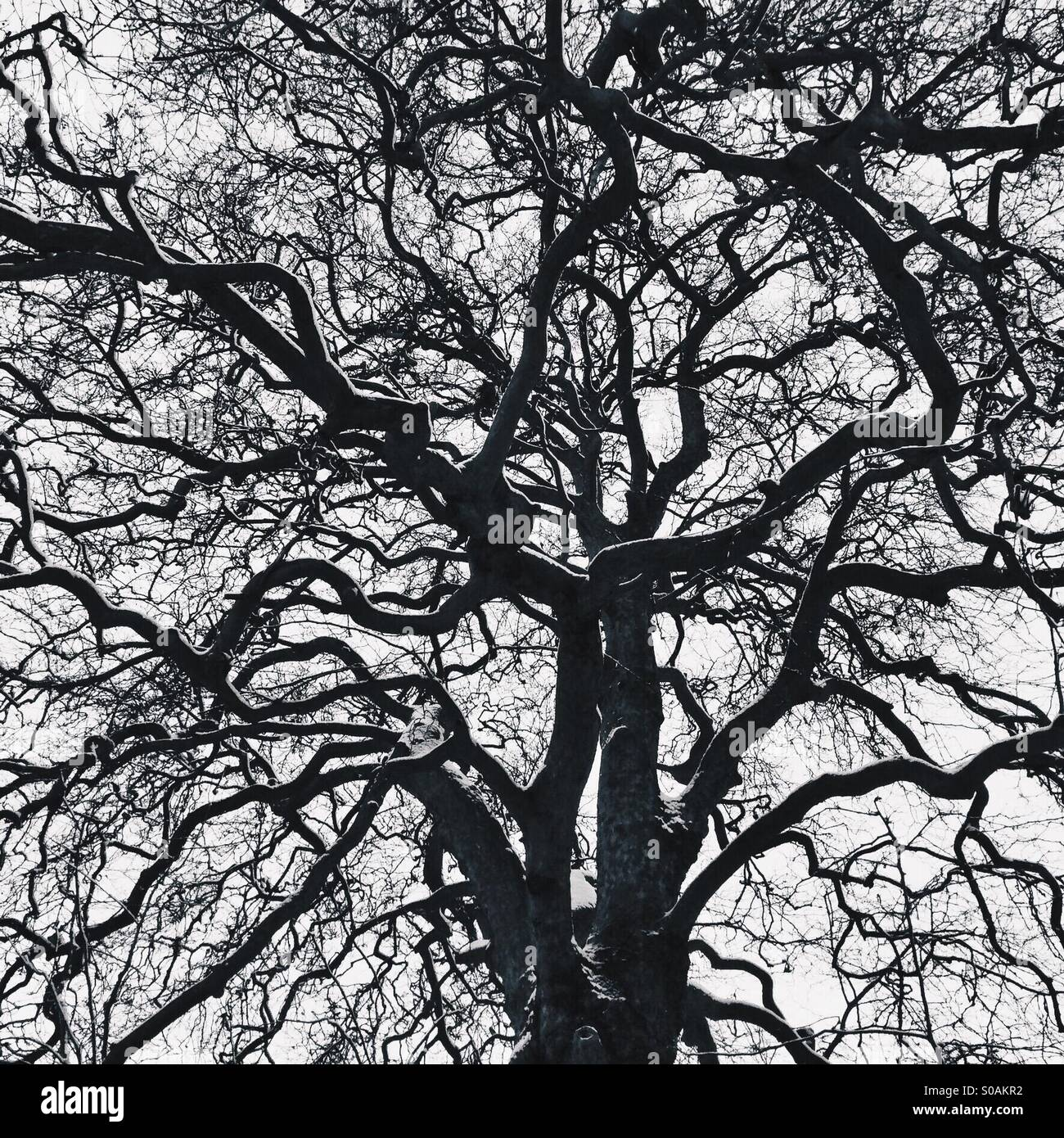 Rami di un albero Immagini Stock