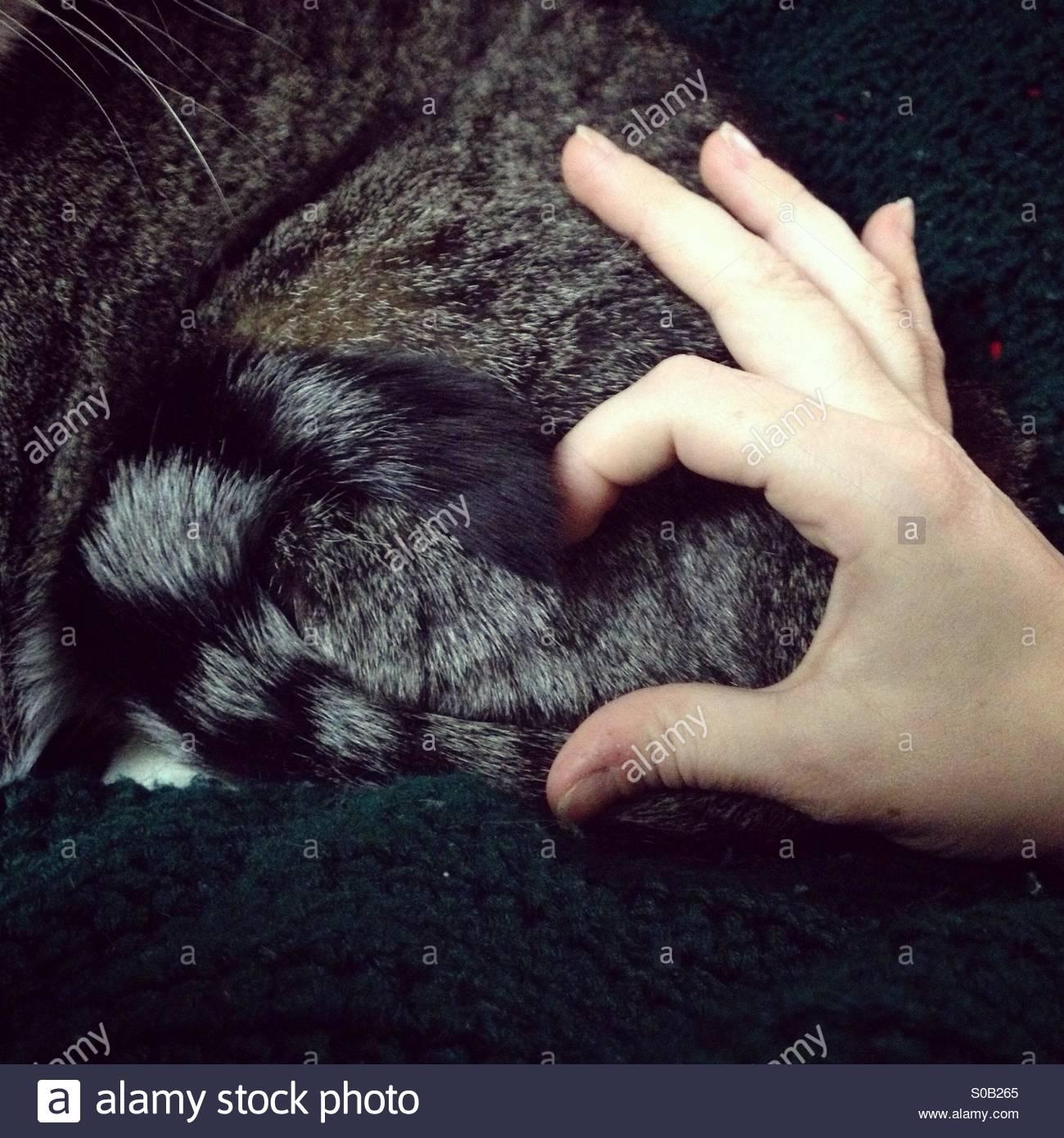 Per gli amanti del gatto. Immagini Stock
