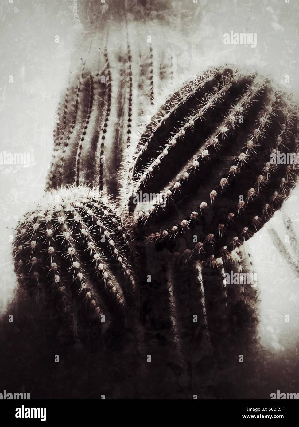 Arizona cactus Saguaro Immagini Stock