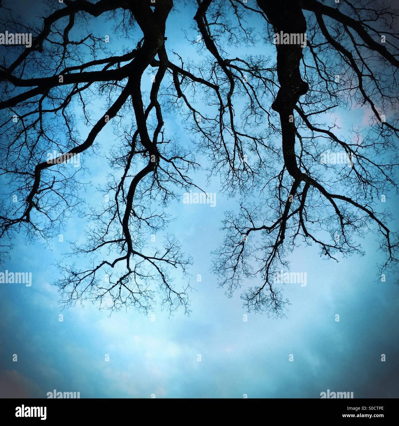 Alberi contro il cielo Immagini Stock