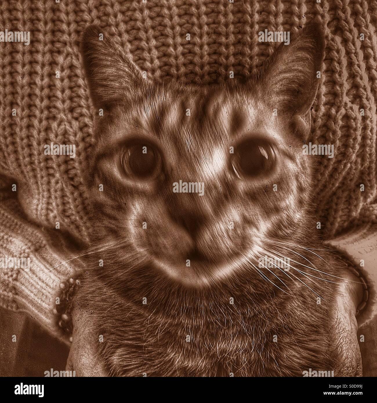 Coccole di gatto Immagini Stock