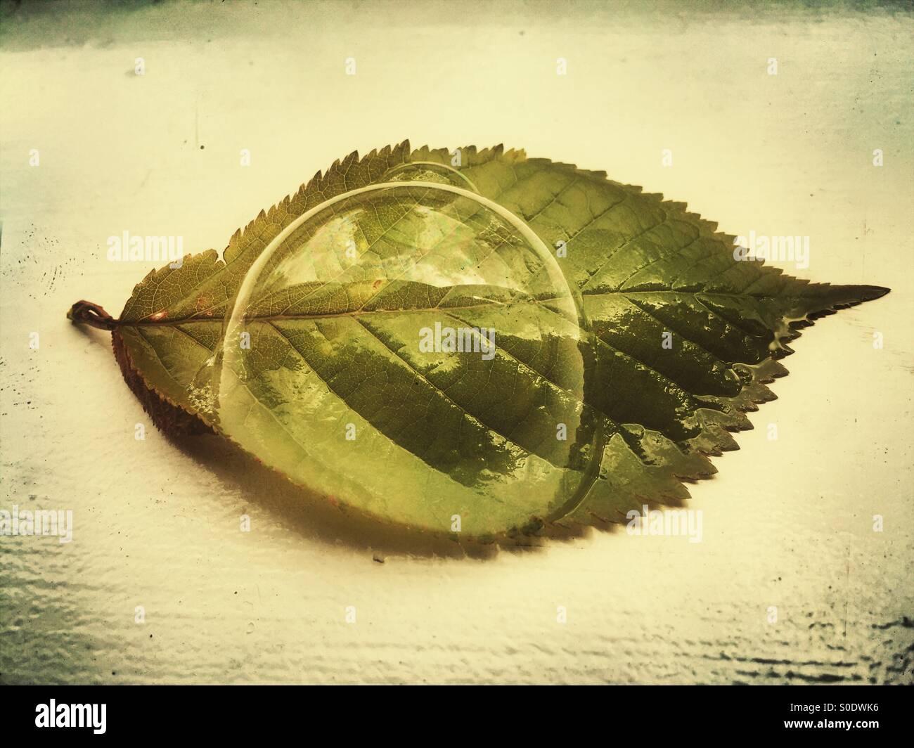 Acqua bolla sopra una foglia verde Immagini Stock