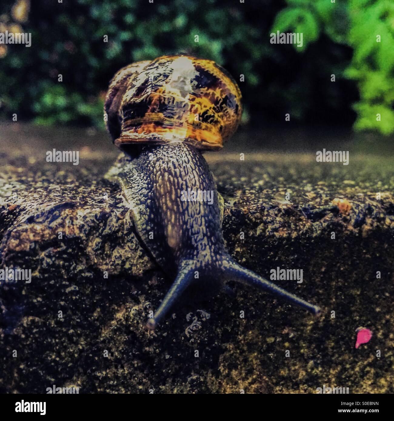 Snail andando oltre il bordo di un passo. Immagini Stock