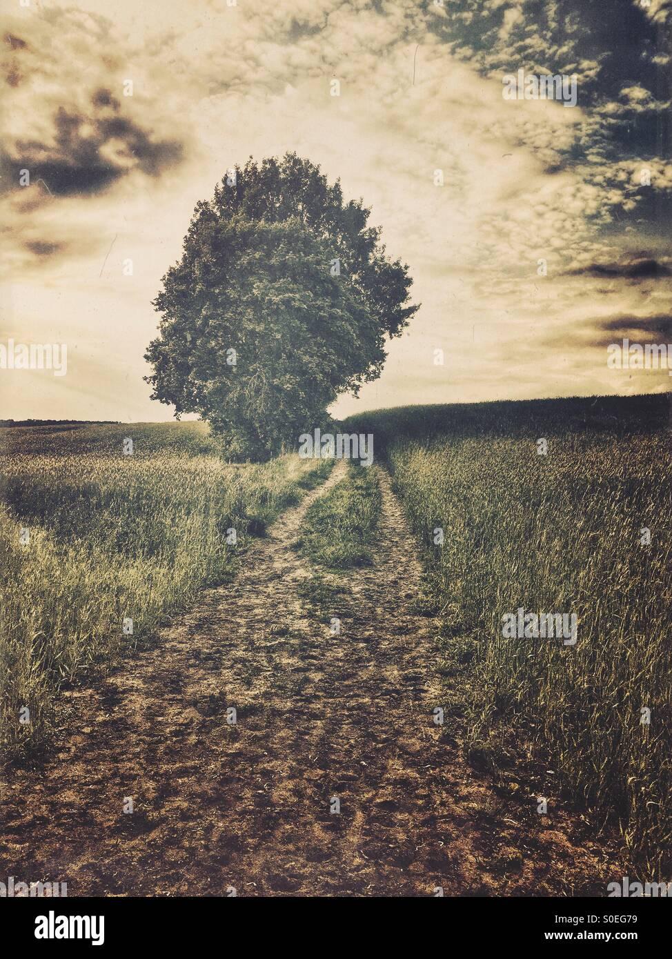 Lone Tree nel campo Immagini Stock