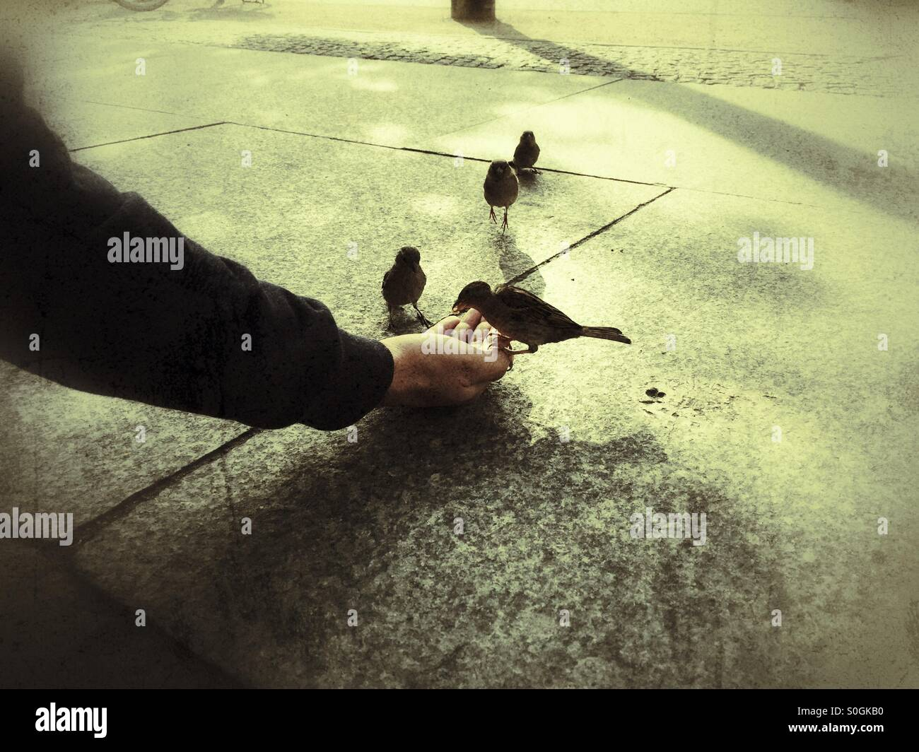 Uomo passero alimentazione di uccelli selvatici Immagini Stock