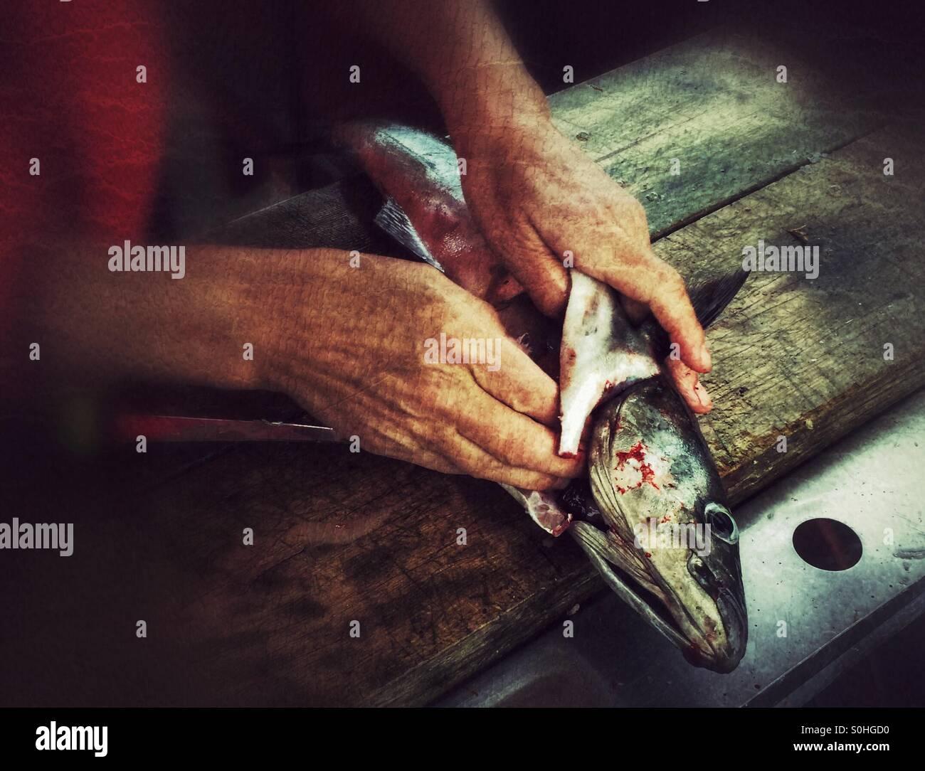 Pulizia pesce Immagini Stock