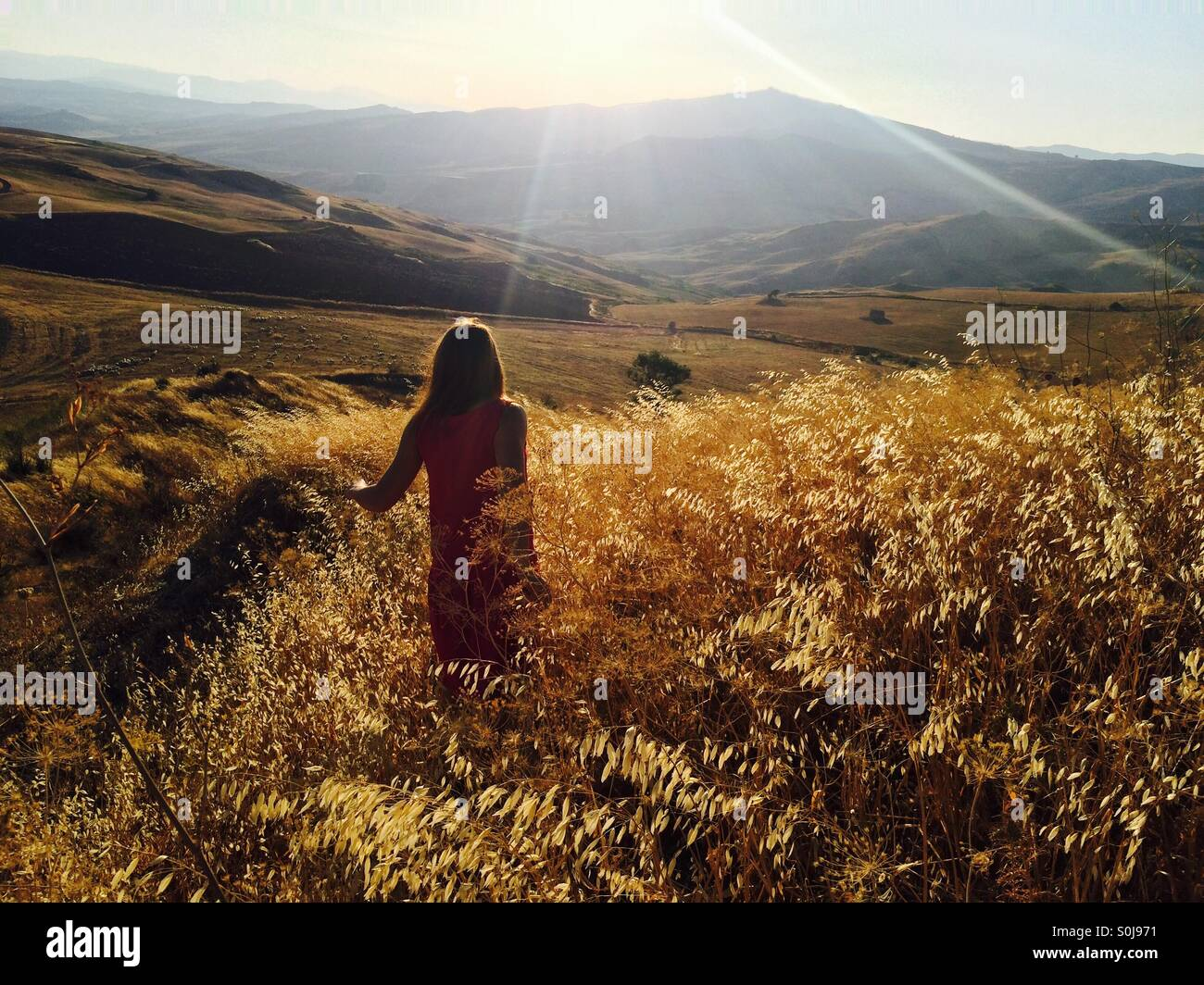 Campi d'oro Foto Stock