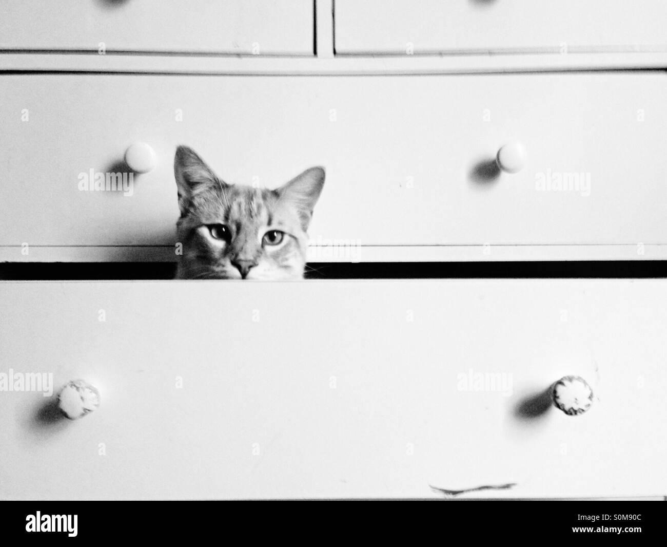 Gatto che si nasconde in un certo vuoto cassettiera cassetti. Immagini Stock