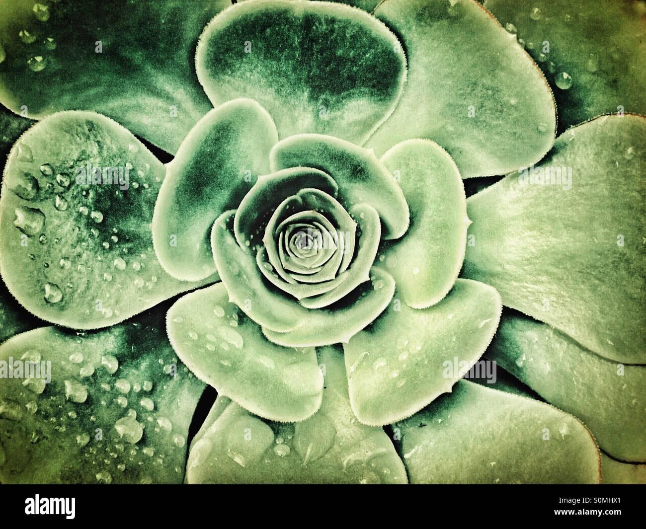Alta definizione fiore con gocce di pioggia Immagini Stock