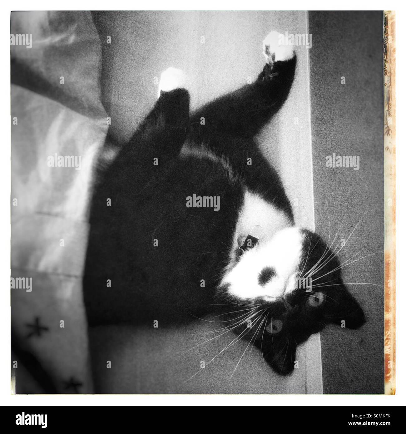 Piumone Bianco E Nero.Bianco E Nero Cat Prevista Nel Letto Parzialmente Coperto Dal