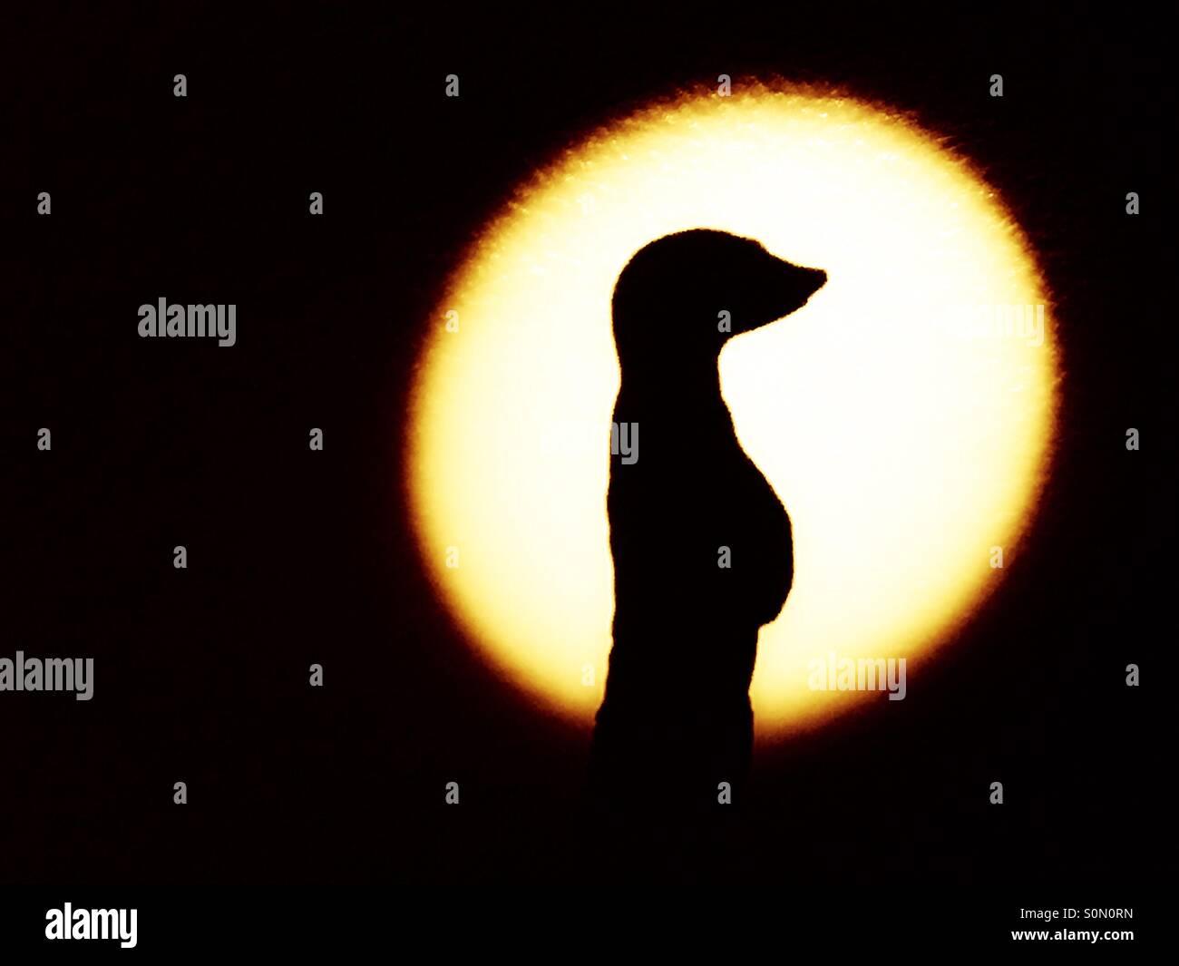 Ombra di una statua di meerkat Immagini Stock