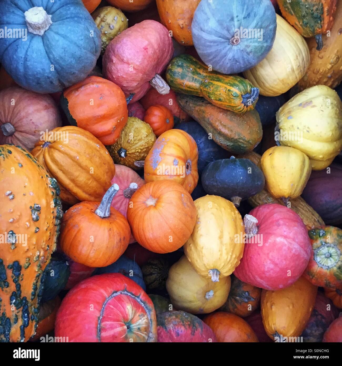 Semplicemente il gourd-geous! Foto Stock
