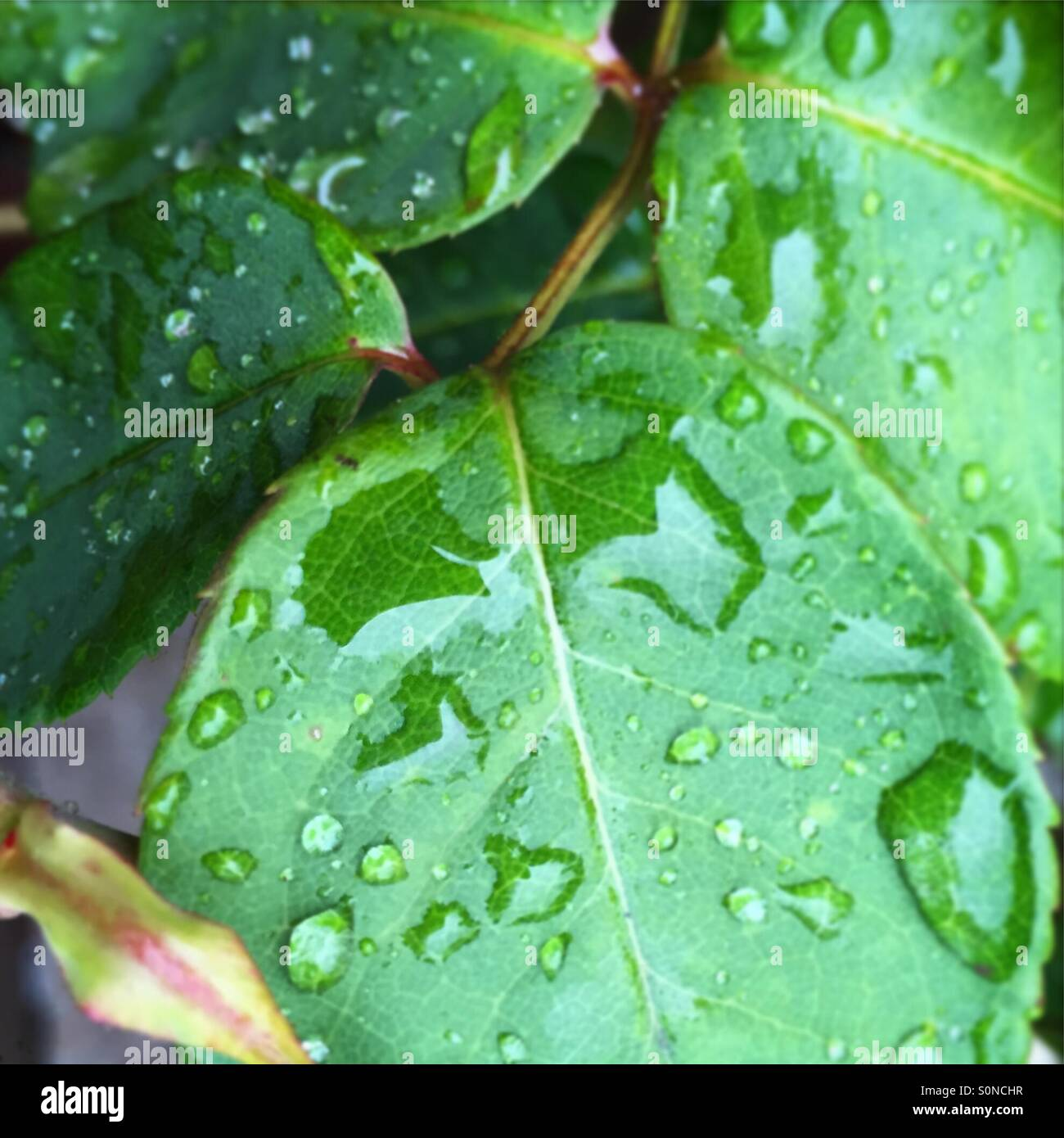 Pioggia del cuore I Foto Stock