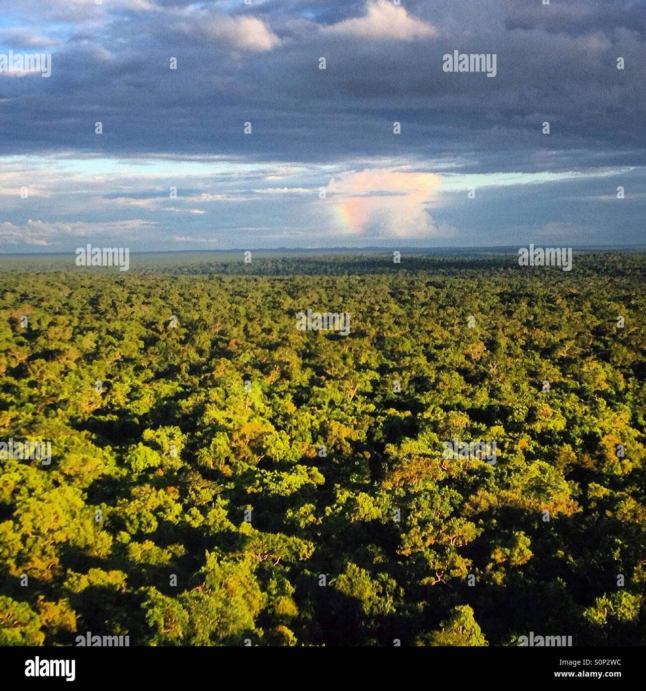 Una tempesta su giungla visto da Danta piramide nella città maya di Mirador, Peten, Guatemala Immagini Stock