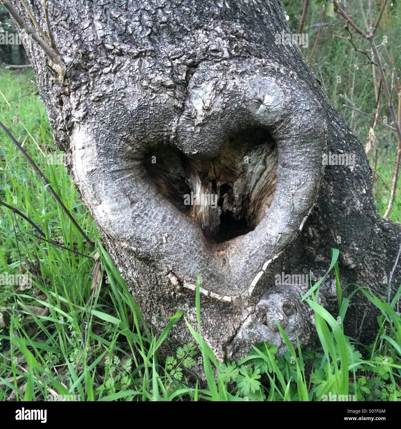 A forma di cuore ad albero dell'amore. Immagini Stock