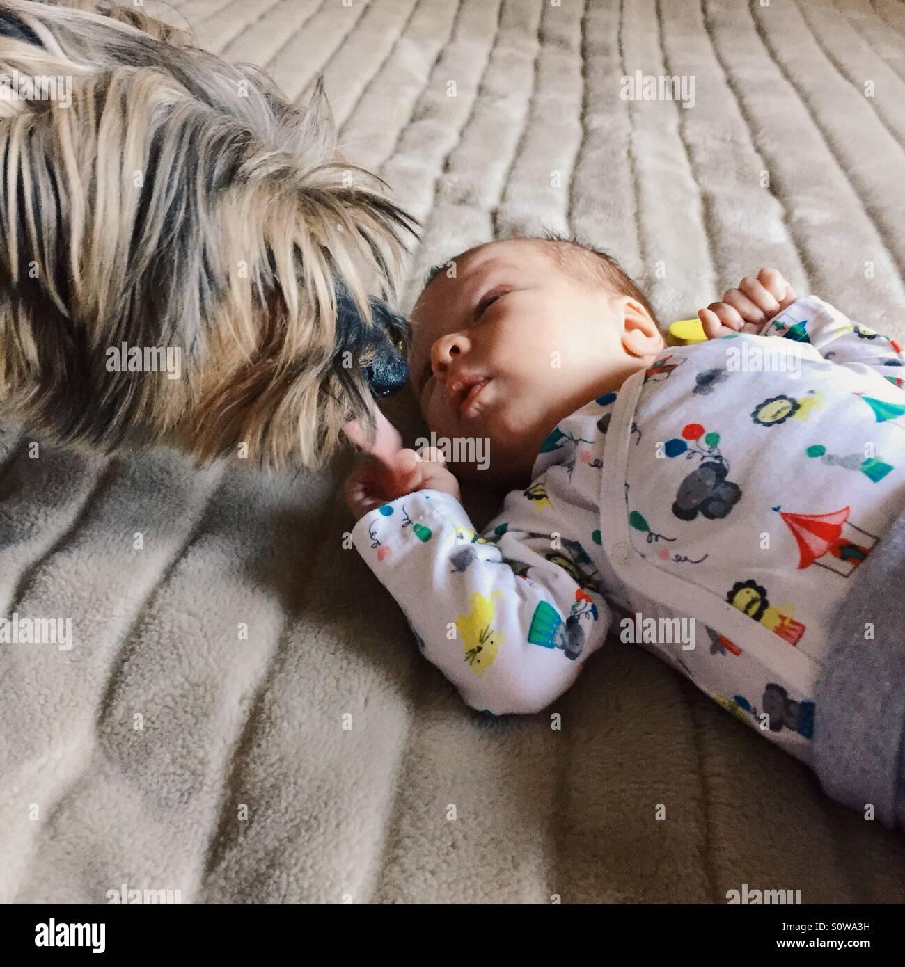 Famiglia pet incontra il neonato Immagini Stock