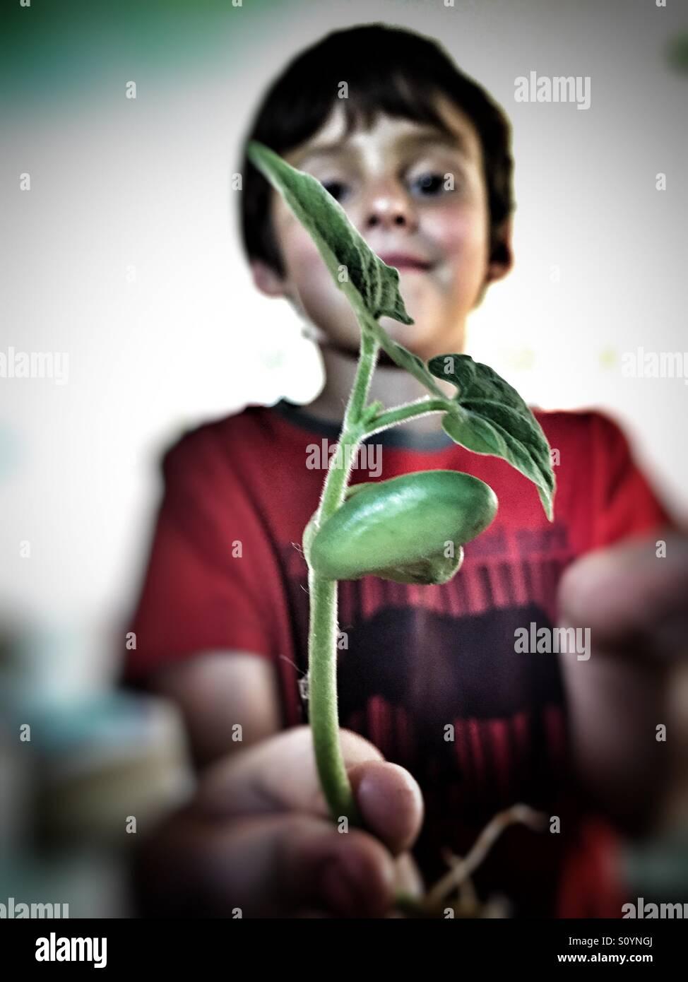 Ragazzo giovane attorno alla pianta di germogli di soia Immagini Stock