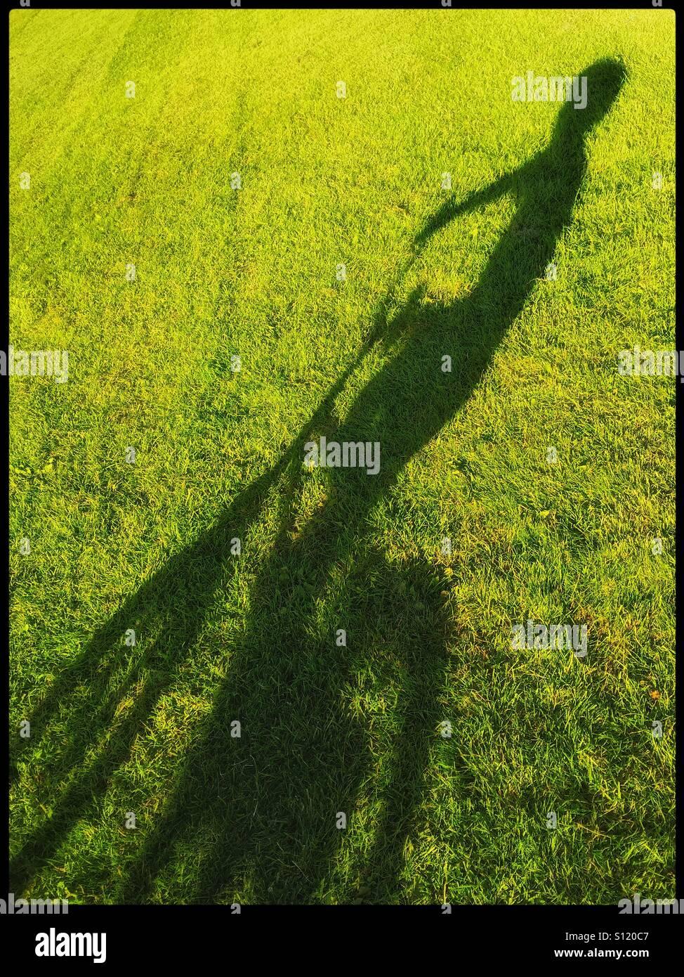 La lunga ombra di un 6 anno vecchio ragazzo sulla sua bicicletta in un aperto area d'erba. Una foto con area Immagini Stock
