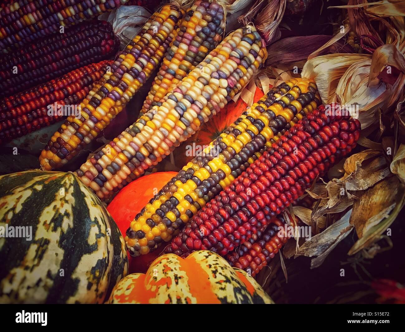 Zucca Halloween Essiccare.Close Up Essiccato Autunno Indian Calli E Zucche In Una Caduta Di