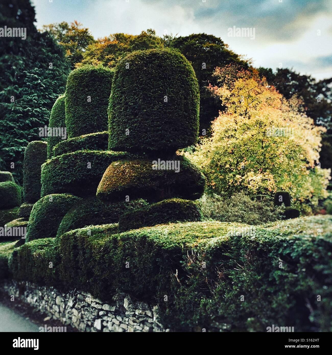 Topiaria da hedge nel giardino in Cumbria Immagini Stock