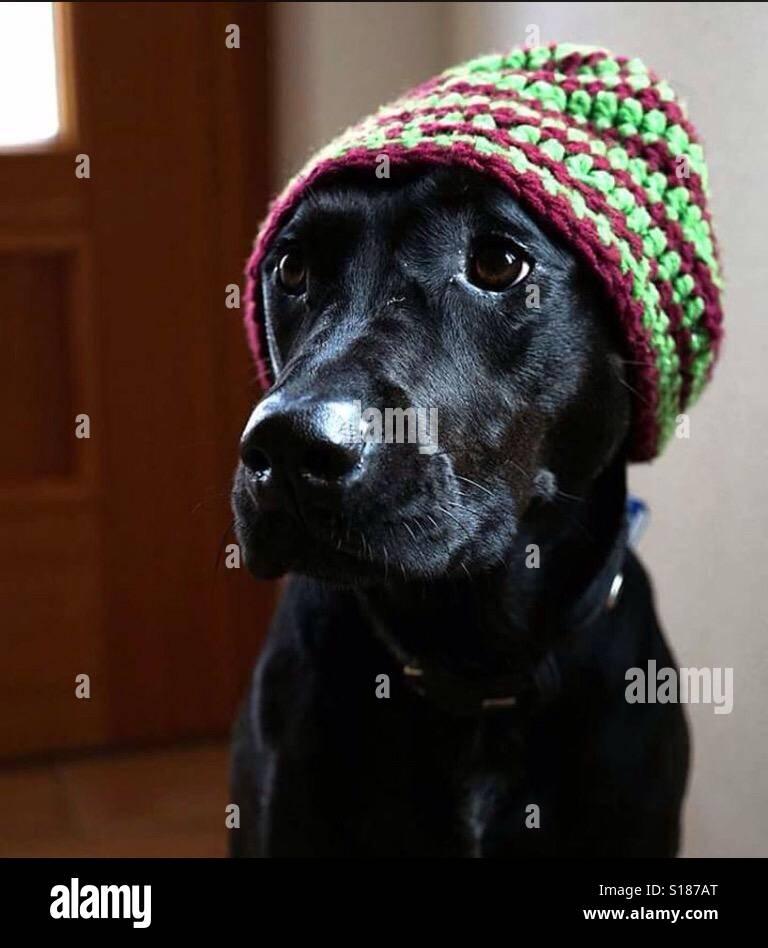 Un cane che indossa accogliente in inverno Foto Stock