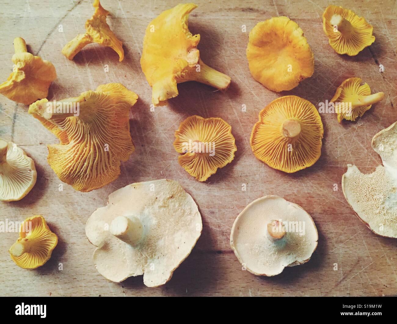 Funghi Foraged su un tagliere. Foto Stock