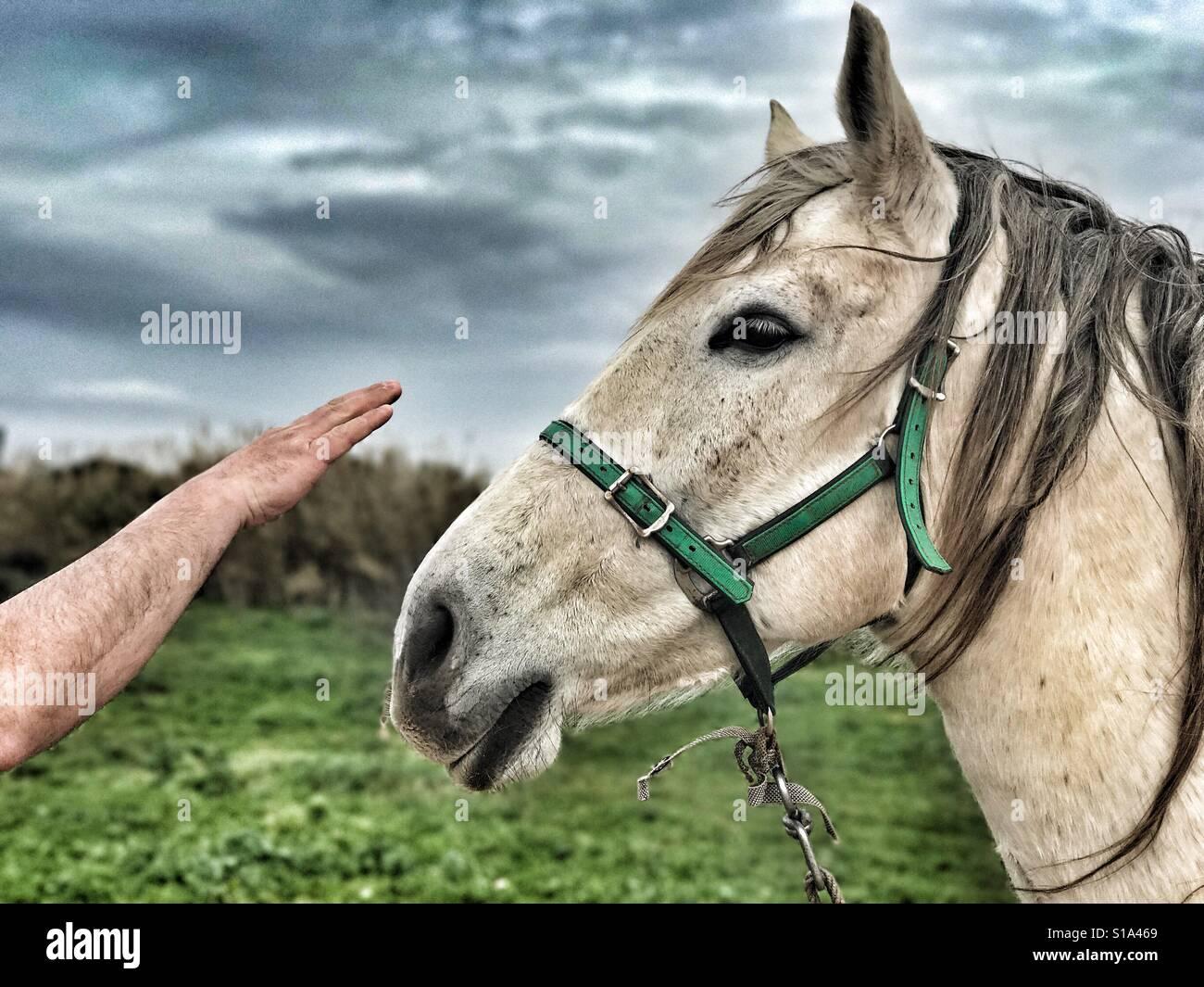 Paura di cavallo Immagini Stock