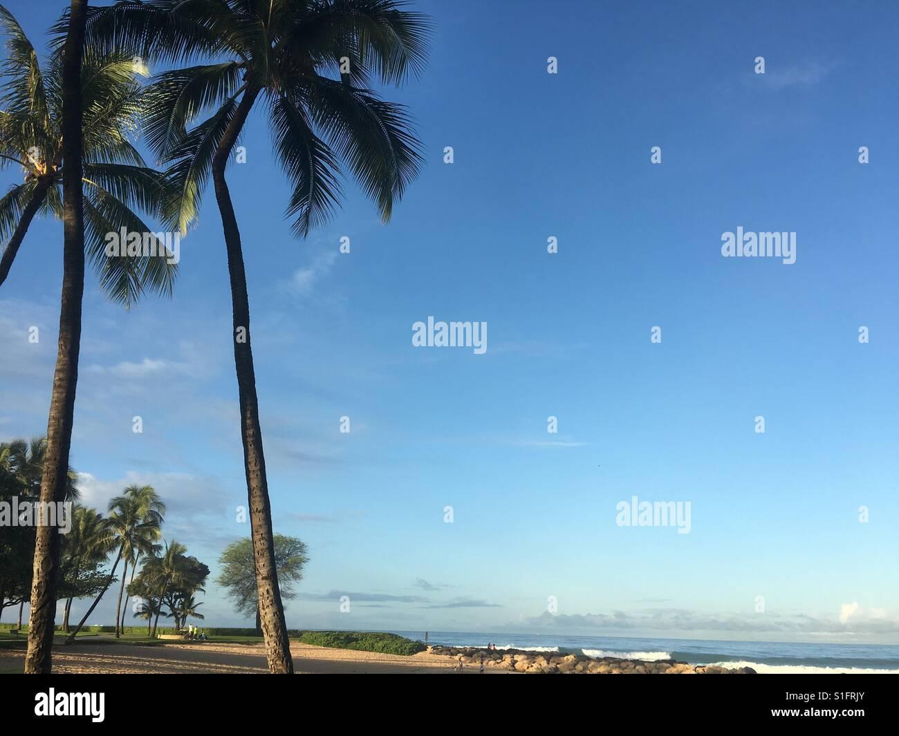 Alberi di palma, oceano beach in una zona tranquilla e calma giorno Immagini Stock