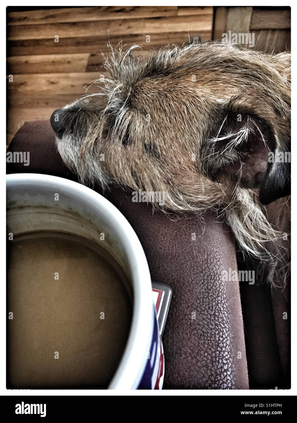 Una tazza di tè e di coccole con il mio Jack Russell Terrier. Immagini Stock