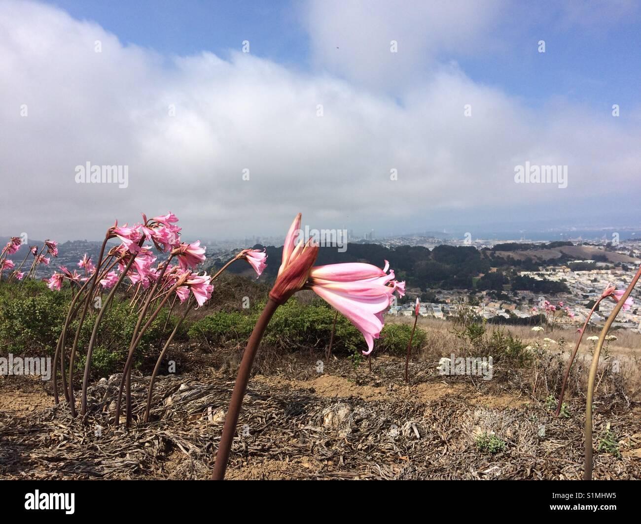 Flor, il cielo, il monte di San Bruno, California. Immagini Stock