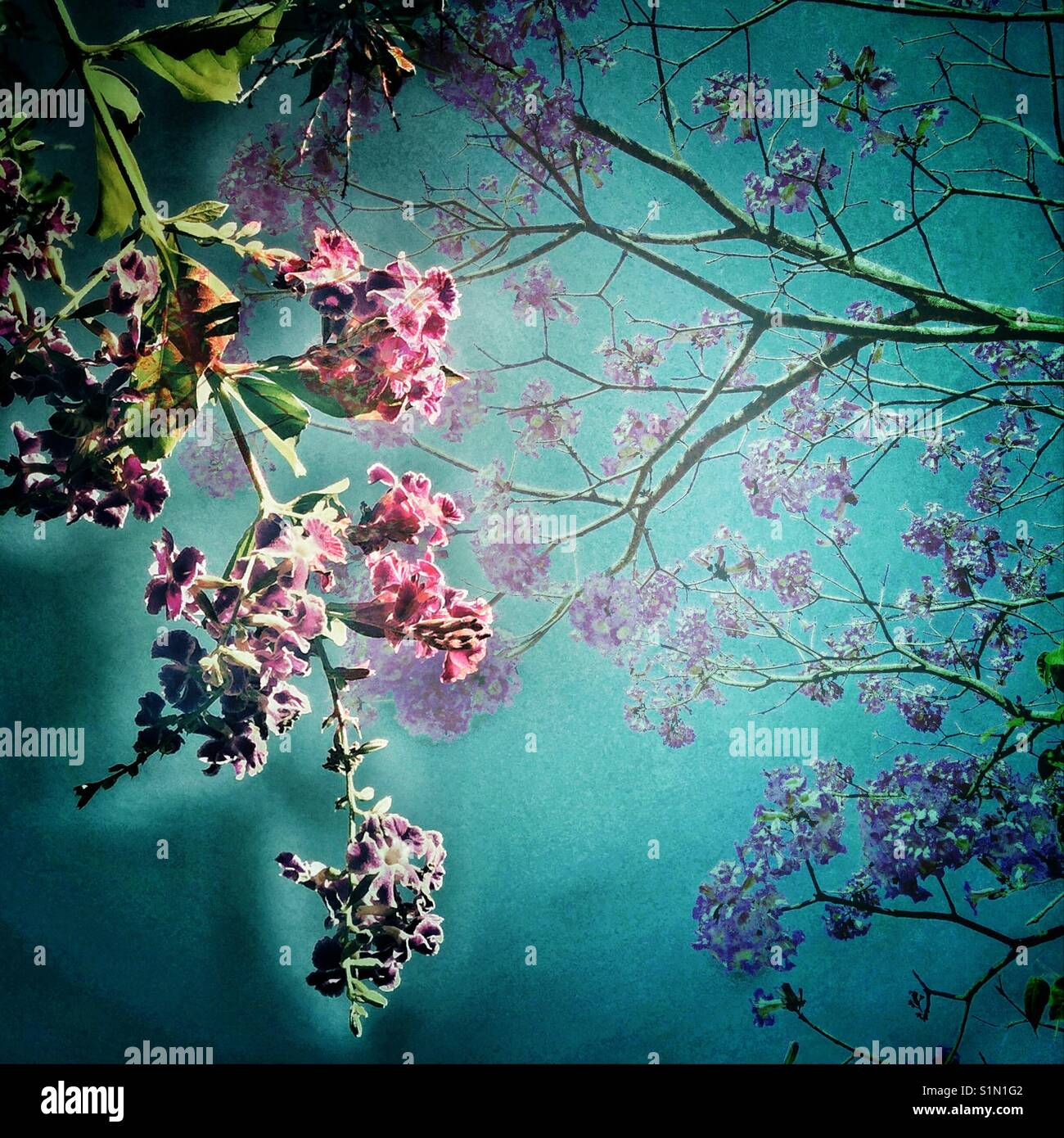 Teal Cieli E Fiori Viola Iphone Foto Tree Sfondo Closeup Di Un