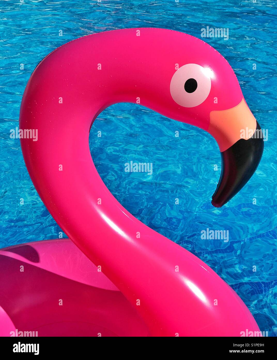 Raggi di sole verso il basso su una rosa fenicottero gonfiabile giocattolo come esso galleggia in una piscina. Un Immagini Stock