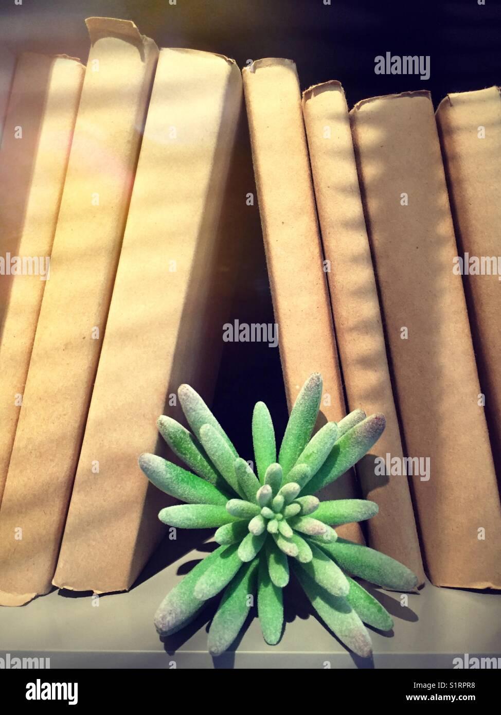 Succulente e generic libri sullo scaffale Immagini Stock