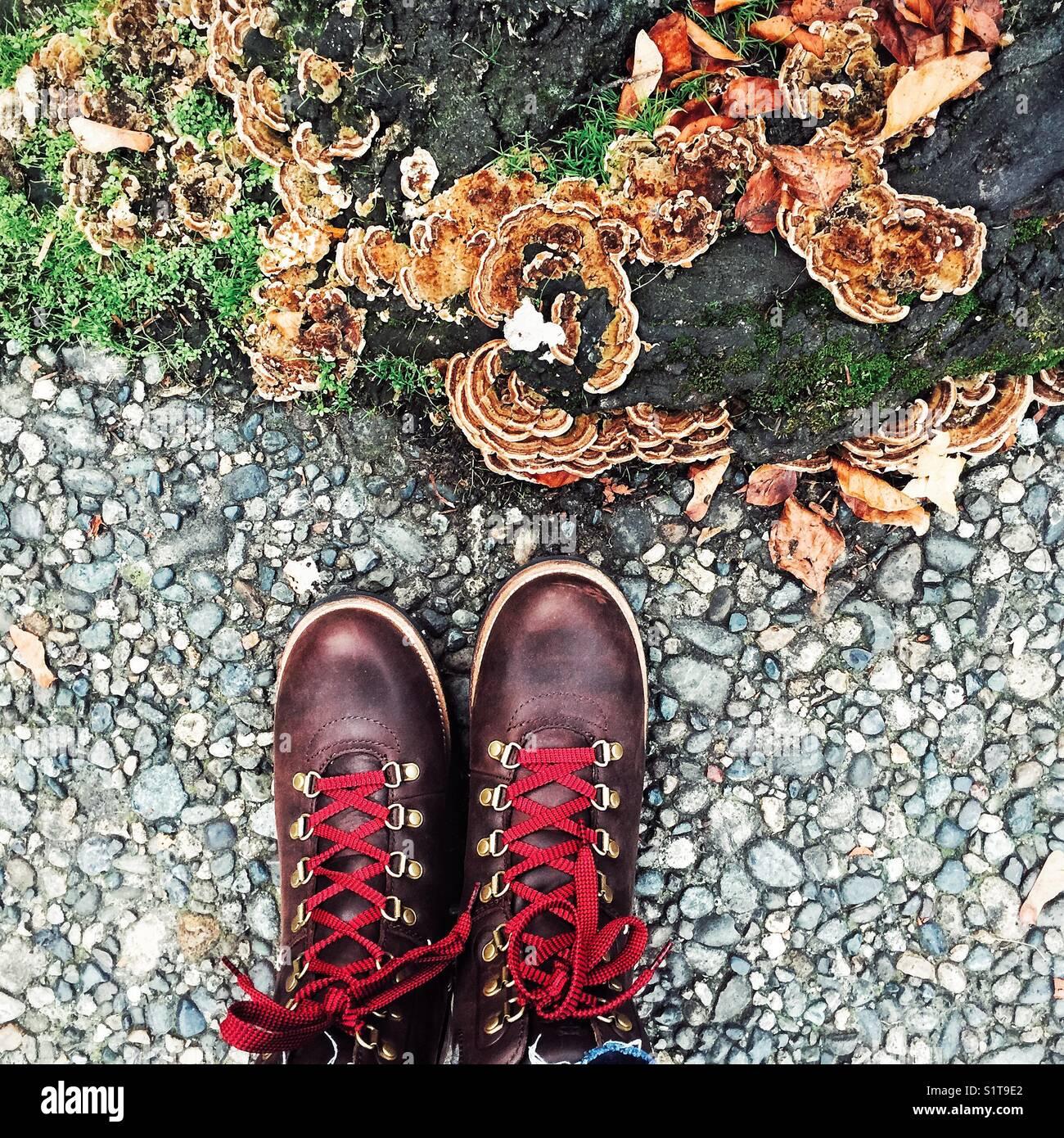 Funghi crescono le radici di un albero e scarpe da trekking con lacci rossi  davanti - segni di autunno 89cedd789f6