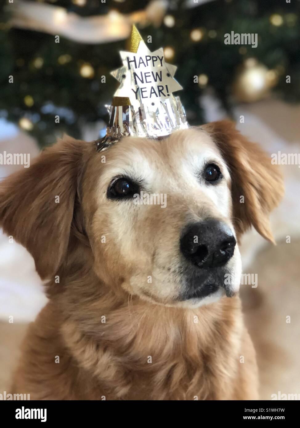 Felice Anno Nuovo Golden Retriever Immagini Stock