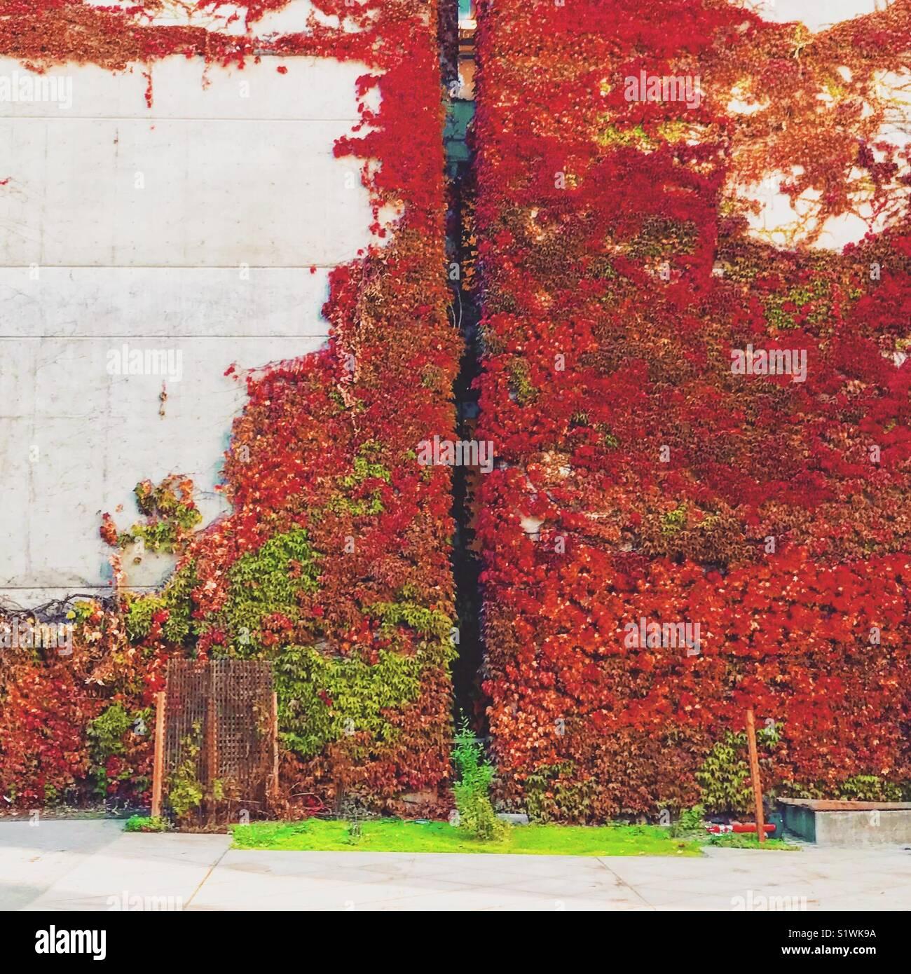 Soggiorno verde, Soggiorno Primavera Foto & Immagine Stock ...
